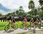 bali, adventure, tours, cycling, elephant park, bali adventure, bali adventure tours, bali cycling, elephant safari park