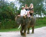 bali elephant camp, bali, elephant, sumatra, camp, bali elephant, safari, elephant safari, elephant riding, elephant safari ride