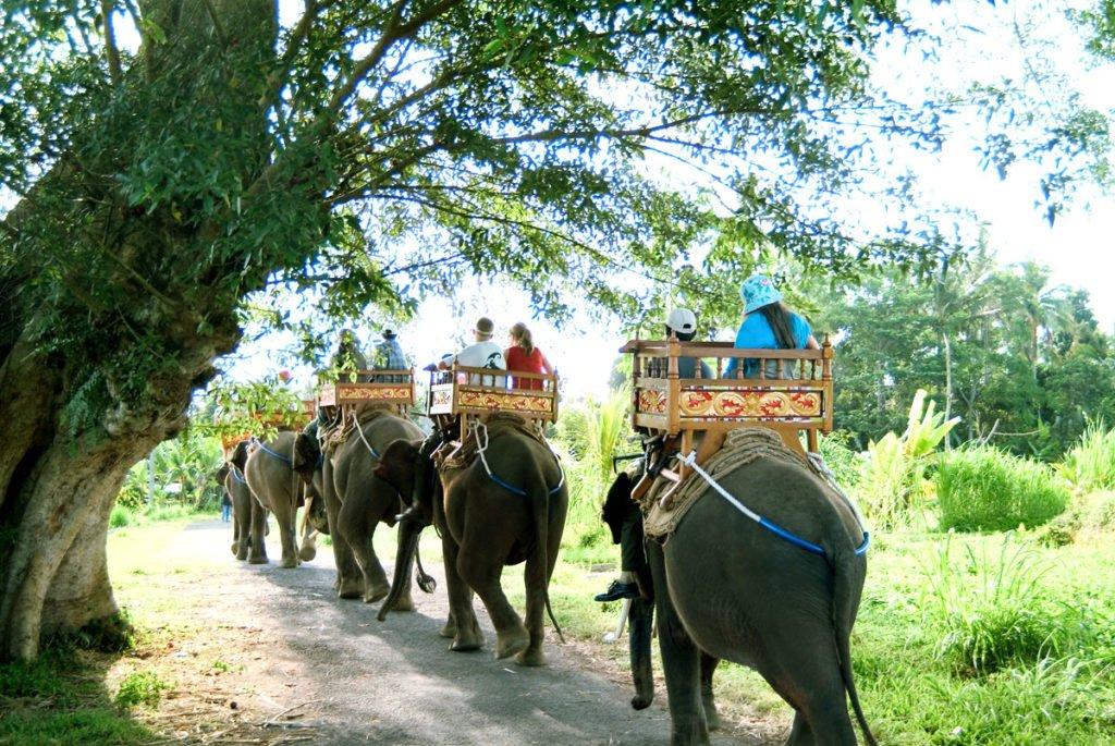 sumatra,  elephant