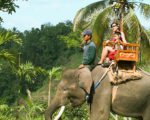 bali, elephant, sumatra, camp, bali elephant, bali elephant camp, safari, elephant safari, elephant riding, elephant safari ride, exotic view
