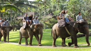 bali elephant ride, bali, elephant, safari, ride, bali elephant, elephant safari, bali elephant safari, elephant safari ride, elephant ride safari
