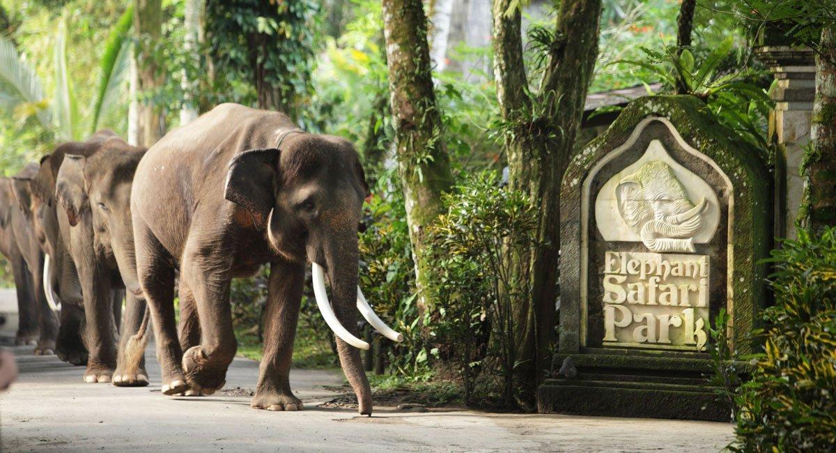 Bali Elephant Safari Park – Taro, Bali Adventure Tours