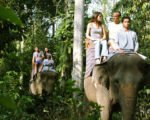 mason elephant ride jungle track, elephant jungle track, bali elephant, bali elephant safari, bali elephant safari park