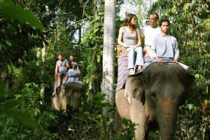 jungle track, elephant jungle track, bali elephant, bali elephant safari, bali elephant safari park