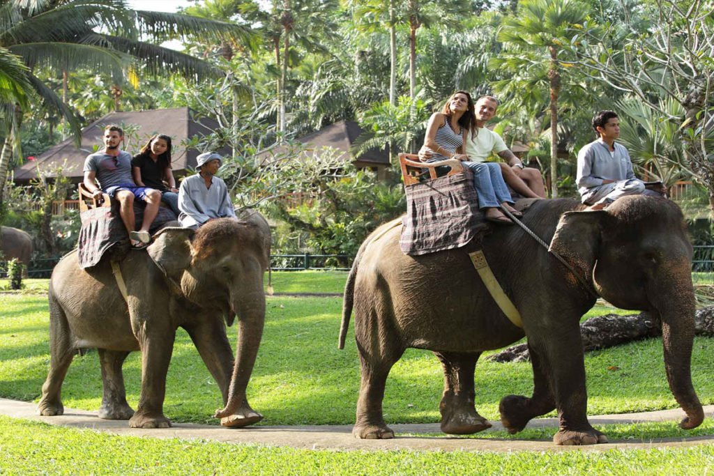 sumatra elephant exciting activities in Ubud