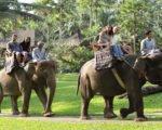 bali, elephant, sumatra, park, safari, taro, bali elephant, bali elephant safari, bali elephant safari park, elephant safari park, elephant ride, elephant safari ride