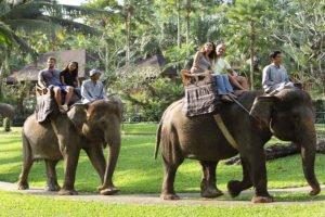 sumatra elephant, sumatra elephant ride, elephant ride, elephant ride bali, bali elephant, bali elephant safari, bali elephant safari park