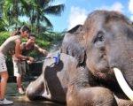 mason elephant ride elephant wash, elephant show bali, bali elephant, bali elephant safari, bali elephant safari park