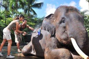 elephant wash, elephant show bali, bali elephant, bali elephant safari, bali elephant safari park