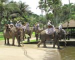 elephant bathing pool, elephant bathing pool access, bali elephant, bali elephant safari, bali elephant safari park