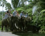 elephant water flashing, bali elephant, bali elephant safari, bali elephant safari park