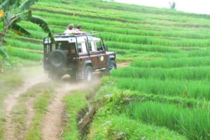 bali, tropical, safaris, bali tropical. bali tropical safaris, 4 wd, jeep, adventures, land rover, 4 wd jeep, jeep adventures, rice paddy track