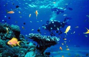 advance dive course, bali, padi, advance, diving, dive, tours, course, bali diving, bali diving course, padi advance diving,