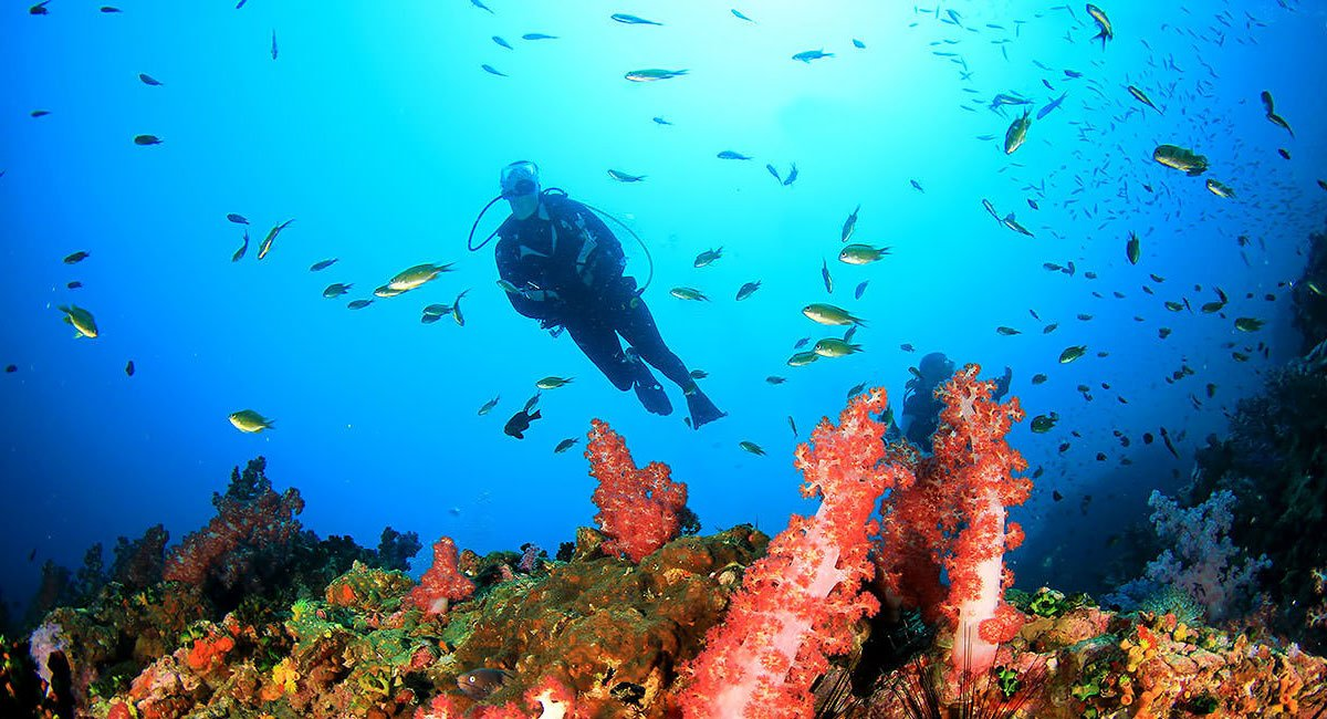 Bali Diving Tours
