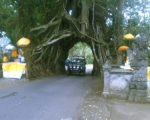 bali, jeep, adventure, land cruise, bali jeep, jeep adventure, bali jeep adventure, 4 wd, land cruises, bunut bolong