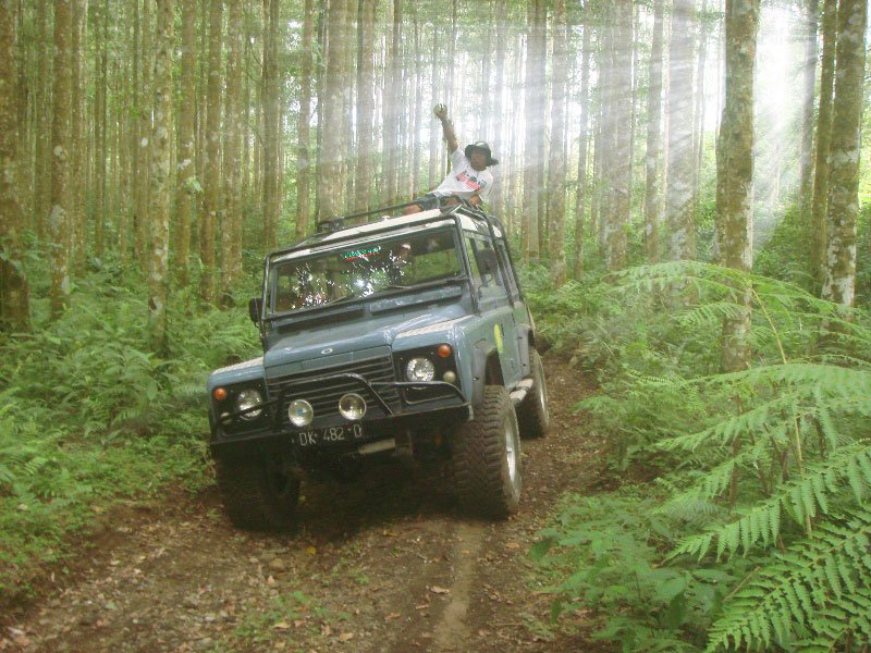 bali, jeep, adventure, land cruise, bali jeep, jeep adventure, bali jeep adventure, 4 wd, land cruises, bedugul, rain forest
