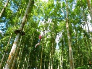 bali, treetop, adventure, park, bedugul, botanical garden, bali treetop, treetop adventure, tree top adventure park, bali treetop adventure park, bedugul botanical garden, tarzan jump