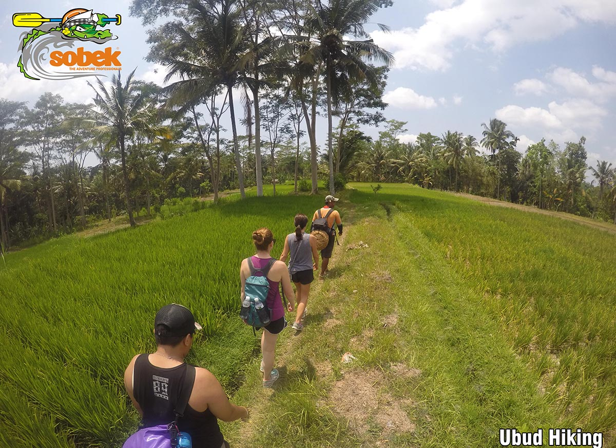 Sobek Trekking Adventure – Ubud Hiking