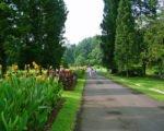 bogor, botanical garden, west java, bandung, places to visit, bogor botanical garden