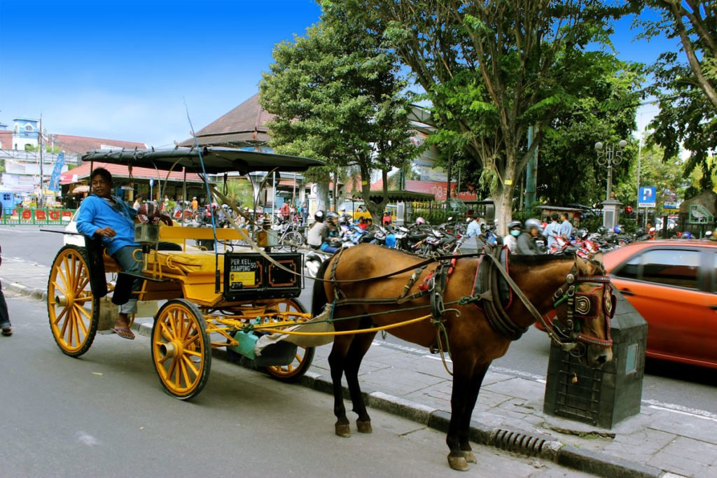 andong, carriage horse, transportations, yogyakarta, java, java island, yogyakarta city, yogyakarta tourism
