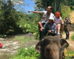 bali gili lombok tour, elephant ride packages, elephant safari packages