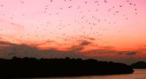 kalong, kalong island, bats, komodo, komodo national park, kalong island, bat island