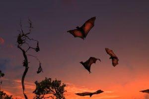bat flying, kalong, kalong island, bats, komodo, komodo national park, kalong island, bat island
