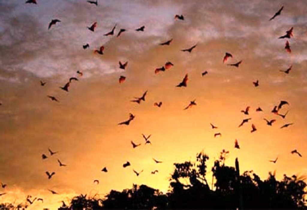 magnificent view, sunset, kalong, kalong island, bats, komodo, kalong island, bat island