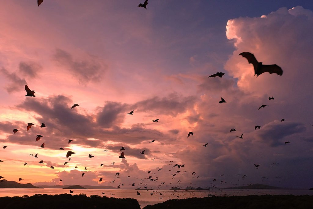 sunset view, kalong, kalong island, bats, komodo, komodo national park, kalong island, bat island