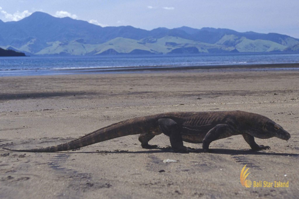 komodo dragon tours packages 4 days