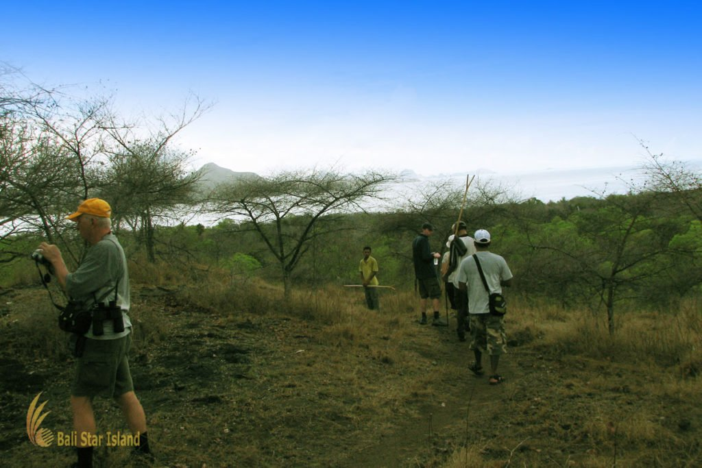 savanna, trekking, adventures, komodo island, komodo dragons