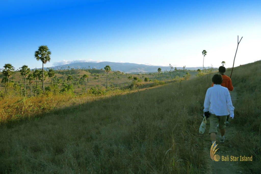 trekking adventures, rinca, rinca island, komodo, komodo dragons, komodo national park
