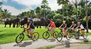 bali cycling, elephant safari, bali cycling elephant safari, elephant safari package, bali cycling elephant safari package, Bali Adventure Tours