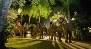 bali cycling, night safari, night safari package, bali cycling night safari, bali cycling night safari package, Bali Adventure Tours