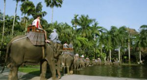 bali elephant safari, bali elephant safari tour, bali elephant safari tour packages, elephant safari tour, bali adventure packages