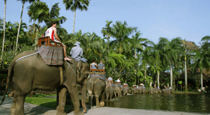 Bali Elephant Safari Park Tour Packages