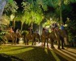 bali night safari, night safari, safari under stars, bali adventure tours, bali elephant safari park