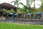 cendana,cendana resort,cendana resort and spa,saltwater pool cendana resort