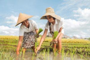 desa visesa ubud resort , desa visesa ubud , desa visesa ubud activity , balinese permaculture