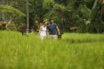 plataran ubud,plataran resort and spa,plataran resort and spa ubud,rice field plataran resort and spa