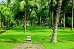 bali hotel, singaraja hotel, lovina hotel, sunari beach resort lovina, sunari beach resort lush garden