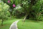 taman selini bungalows, pemuteran bungalow, bali bungalow, bali hotel, pemuteran hotel, taman selini bungalows lush garden