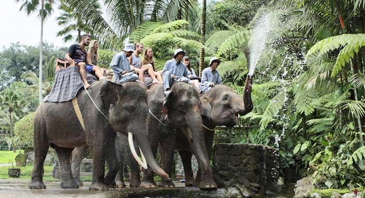 Mason Elephant Safari Park – Taro