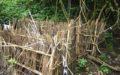 Unique Truyan Grave – Bali Star Island Anniversary