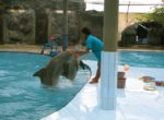 Melka Hotel Dolphin Attractions – 8th Bali Star Island Anniversary