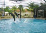 Jumping Dolphin – Melka Hotel – 8th Bali Star Island Anniversary