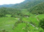 Busung Biu Rice Terrace – 8th Bali Star Island Anniversary