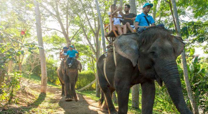 Bali Zoo Elephant Expedition