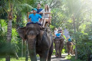 bali zoo elephant, zoo elephant, bali zoo elephant ride, bali zoo elephant expedition
