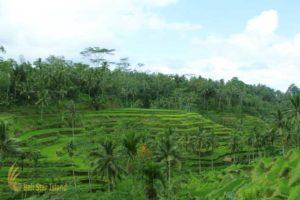 tegalalang rice terrace, bali rice terrace, rice terrace, ubud tour
